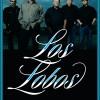 LaLuz_Los-Lobos_cover